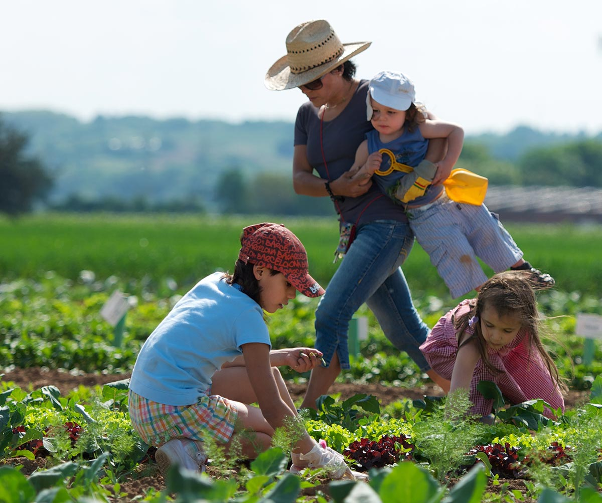 Familie bei der Ernte