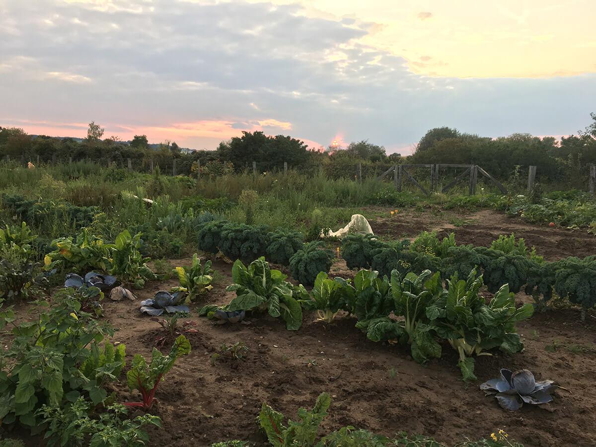 Mein Ernte Feld im Herbst mit Sonnenuntergang