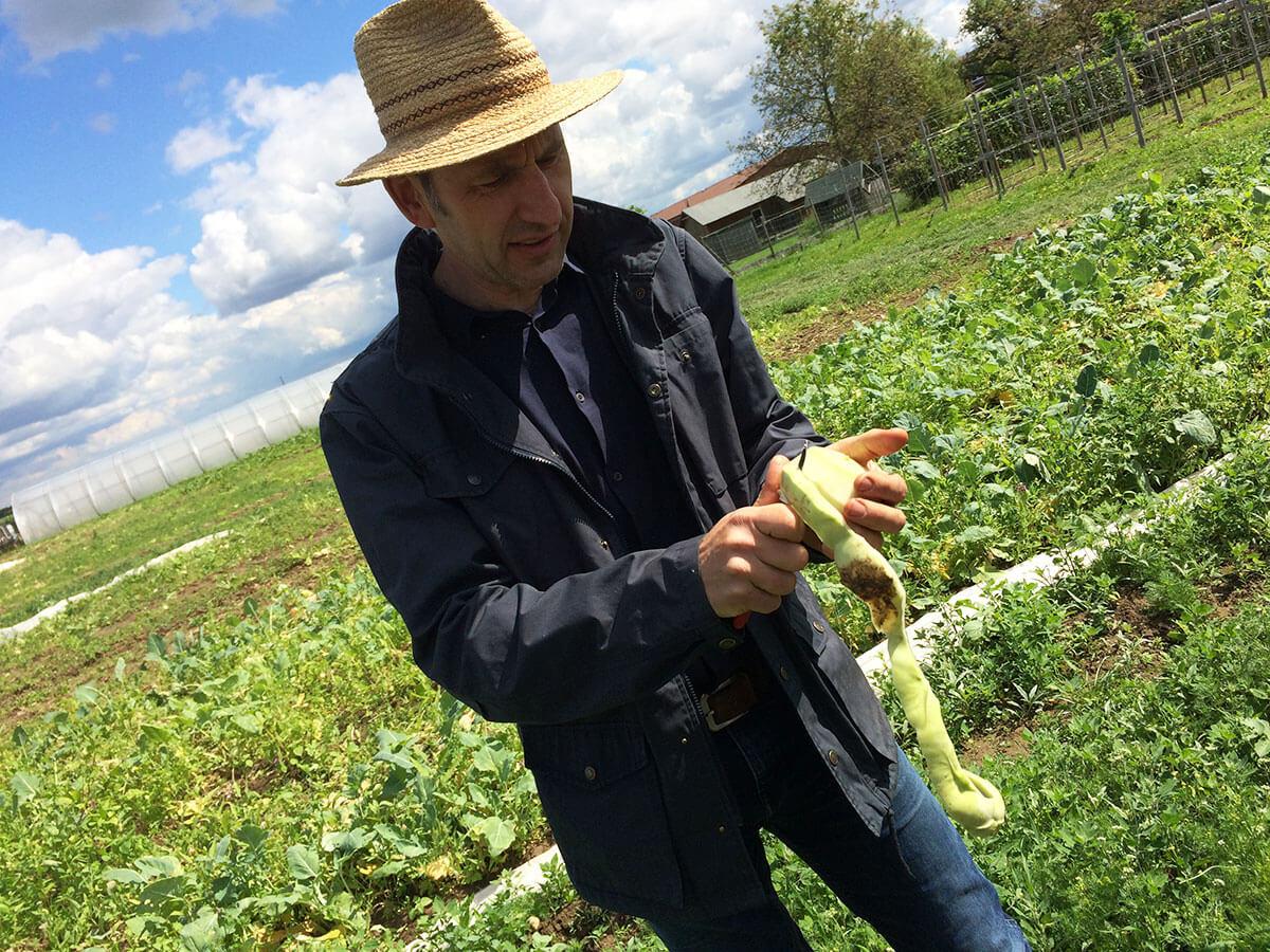 Lothar schält Mairüber zur Verköstigung auf dem Feld