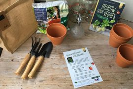 Regrow your veggies Set